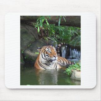 Sumatra tiger mouse pad