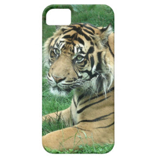 Sumatra Tiger On iPhone 5 Barely There iPhone 5 Covers