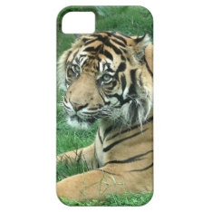 Sumatra Tiger On iPhone 5 Barely There iPhone SE/5/5s Case at Zazzle