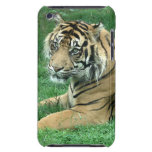 Sumatra Tiger On Your iPod Touch Case-Mate