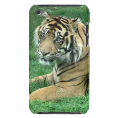 Sumatra Tiger On Your Ipod Touch Case-mate at Zazzle