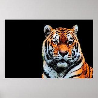 Sumatran Borneo Tiger Poster