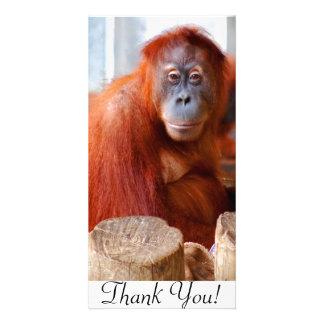 Sumatran Orangutan, Friendly and Intelligent Card