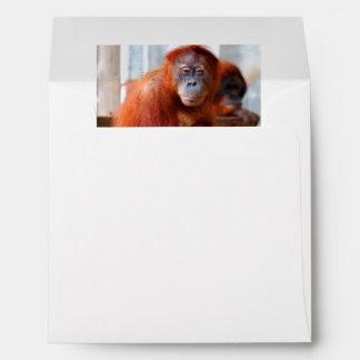 Sumatran Orangutan, Friendly and Intelligent Envelope