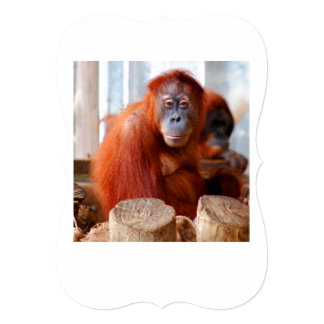 "Sumatran Orangutan, Friendly and Intelligent 5"" X 7"" Invitation Card"
