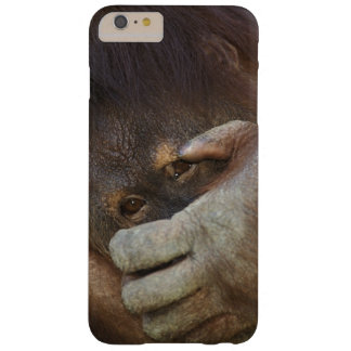 Sumatran Orangutan, Pongo pygmaeus Barely There iPhone 6 Plus Case