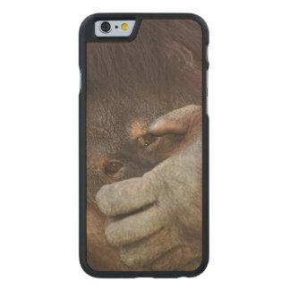 Sumatran Orangutan, Pongo pygmaeus Carved® Maple iPhone 6 Case