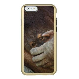 Sumatran Orangutan, Pongo pygmaeus Incipio Feather® Shine iPhone 6 Case