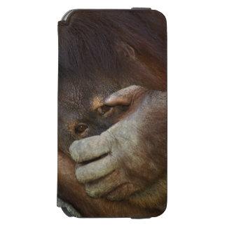 Sumatran Orangutan, Pongo pygmaeus iPhone 6/6s Wallet Case