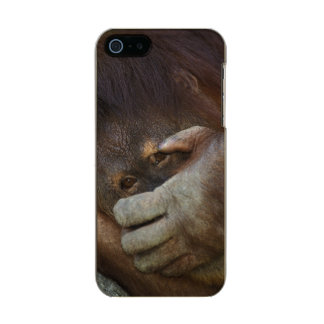 Sumatran Orangutan, Pongo pygmaeus Metallic Phone Case For iPhone SE/5/5s