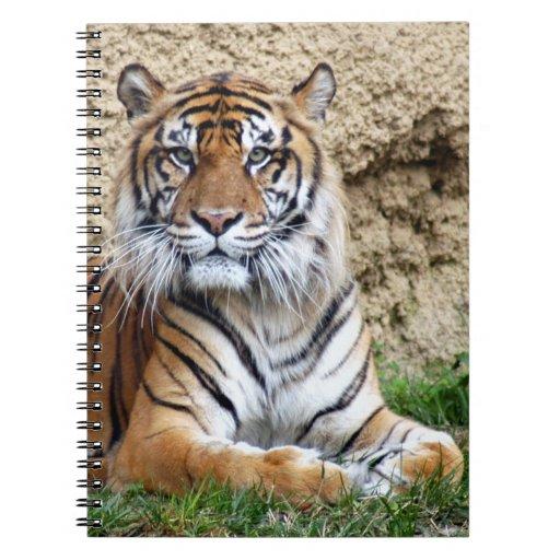 sumatran tiger 8 note books