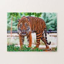 Sumatran Tiger. Big Cats. Jigsaw Puzzle