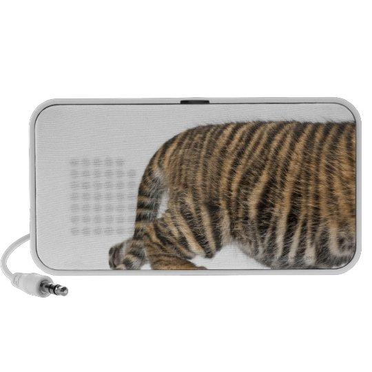 Sumatran Tiger cub 2 Speaker
