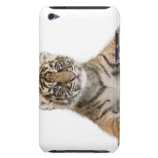 Sumatran Tiger cub iPod Case-Mate Cases
