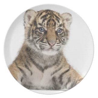 Sumatran Tiger cub Dinner Plate