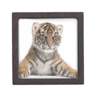 Sumatran Tiger cub Gift Box