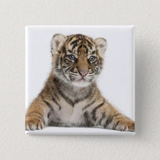 Sumatran Tiger cub - Panthera tigris sumatrae (3 Button