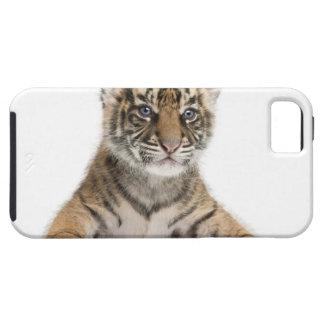 Sumatran Tiger cub - Panthera tigris sumatrae (3 iPhone SE/5/5s Case