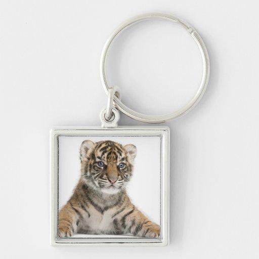 Sumatran Tiger cub - Panthera tigris sumatrae (3 Key Chain