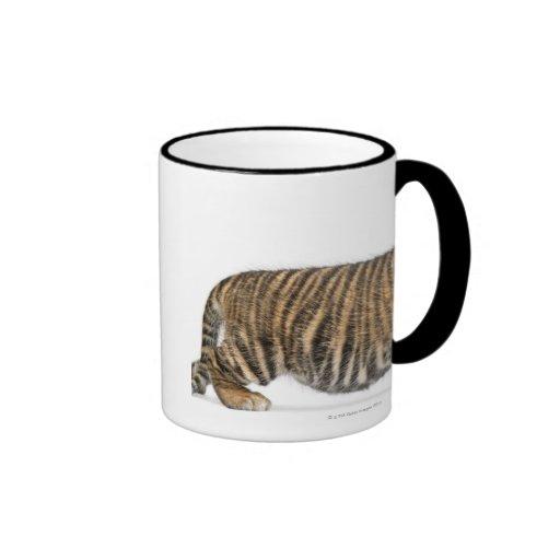 Sumatran Tiger cub - Panthera tigris sumatrae (3 Ringer Coffee Mug