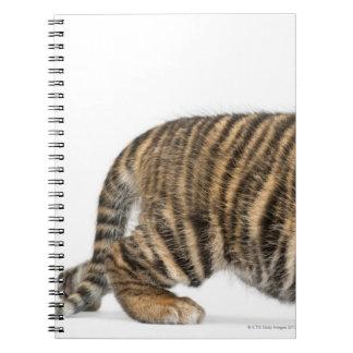 Sumatran Tiger cub - Panthera tigris sumatrae (3 Spiral Notebook