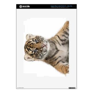 Sumatran Tiger cub Skin For iPad 3