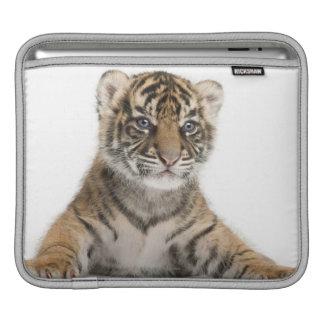 Sumatran Tiger cub Sleeve For iPads