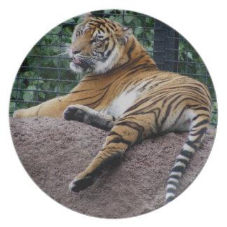 Sumatran Tiger Dinner Plates