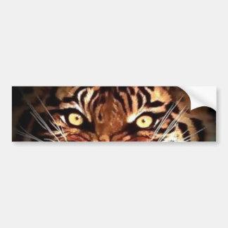 Sumatran Tiger Eyes Car Bumper Sticker
