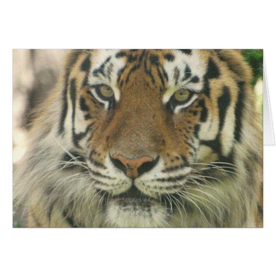 Sumatran Tiger Greeting Cards