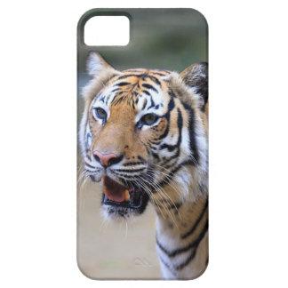 Sumatran Tiger iPhone SE/5/5s Case