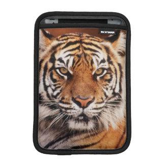 Sumatran Tiger, Panthera tigris Sleeve For iPad Mini