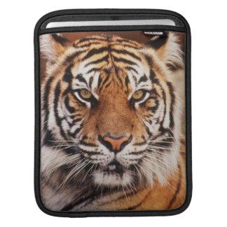 Sumatran Tiger, Panthera tigris Sleeve For iPads