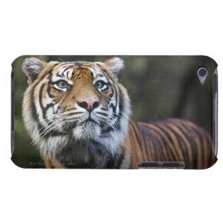 Sumatran Tiger (Panthera tigris sumatrae) Barely There iPod Case