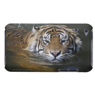 Sumatran tiger, Panthera tigris sumatrae Barely There iPod Cover