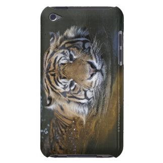 Sumatran tiger, Panthera tigris sumatrae Barely There iPod Case