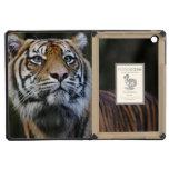 Sumatran Tiger (Panthera tigris sumatrae) iPad Mini Retina Cover