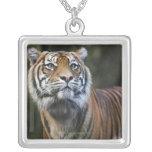 Sumatran Tiger (Panthera tigris sumatrae) in Square Pendant Necklace