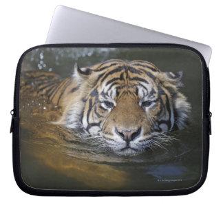 Sumatran tiger, Panthera tigris sumatrae Laptop Sleeves