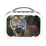 Sumatran Tiger (Panthera tigris sumatrae) Yubo Lunch Boxes