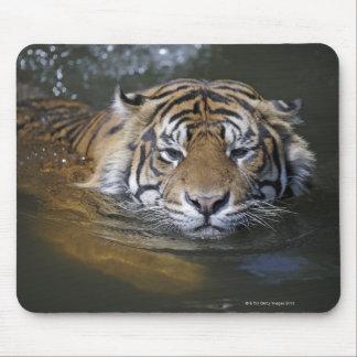 Sumatran tiger, Panthera tigris sumatrae Mouse Pad