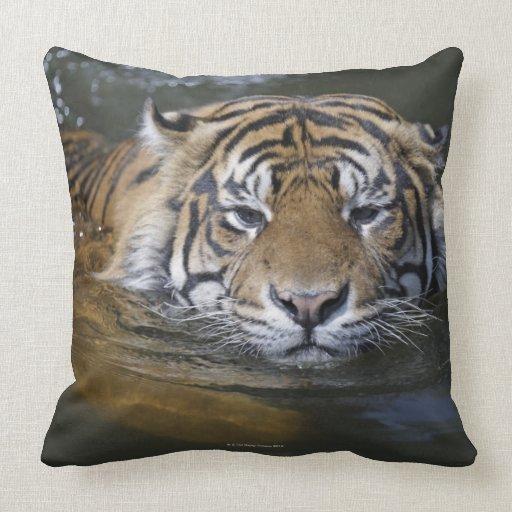 Sumatran tiger, Panthera tigris sumatrae Pillows