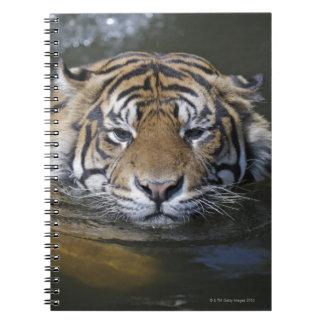 Sumatran tiger, Panthera tigris sumatrae Spiral Notebook