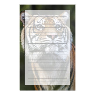 Sumatran Tiger (Panthera tigris sumatrae) Customized Stationery