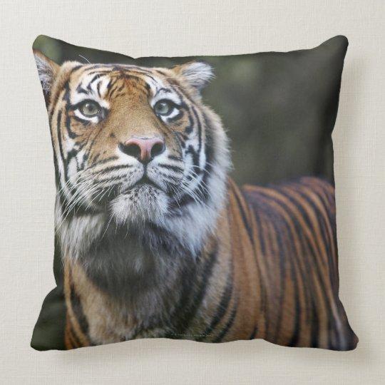 Sumatran Tiger (Panthera tigris sumatrae) Throw Pillow