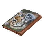 Sumatran Tiger (Panthera tigris sumatrae) Wallets