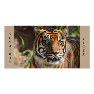 Sumatran Tiger photocard Card