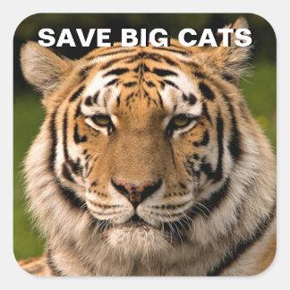 Sumatran Tiger Portrait Square Sticker