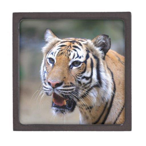 Sumatran Tiger Premium Trinket Boxes