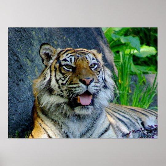 Sumatran Tiger print